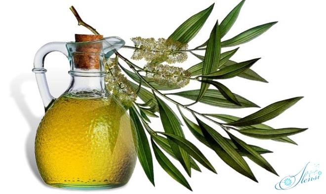 Чайное дерево и его масло - спешат на помощь