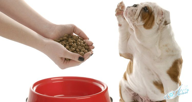 Собаке дают еду